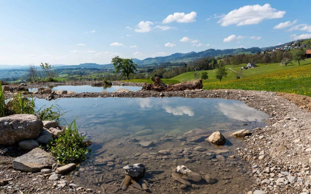 Trittsteinbiotop mit Laichgewässern in Rieden SG
