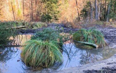 Amphibienförderung Rempen, Vorderthal SZ