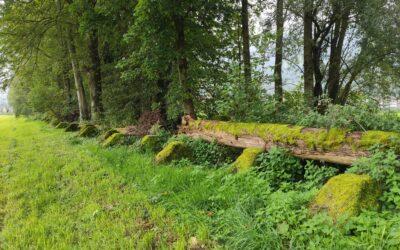 Aufwertung Toblerone-Panzersperre, Schübelbach SZ